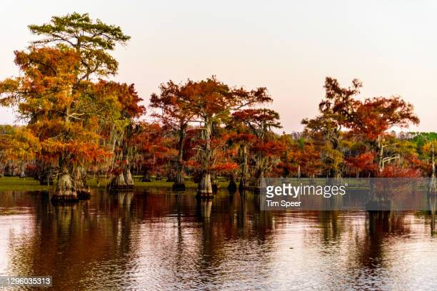 fall colors caddo lake texas