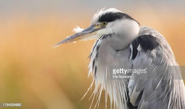 early bird - fågel imagens e fotografias de stock