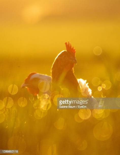 early birds - baum stock pictures, royalty-free photos & images