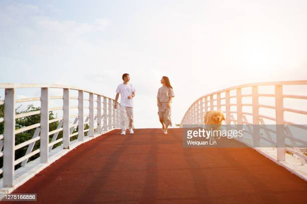 early in the morning, a couple and a dog are walking - fujian province stock pictures, royalty-free photos & images