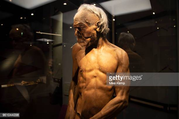 Early modern man at the human evolution exhibit at the Natural History Museum in London England United Kingdom The museum exhibits a vast range of...