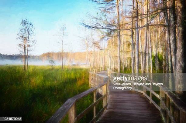 early morning along the boardwalk at corkscrew swamp sanctuary - gulf coast states fotografías e imágenes de stock
