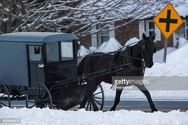 Early morning Amish horse and Buggy on snowy road