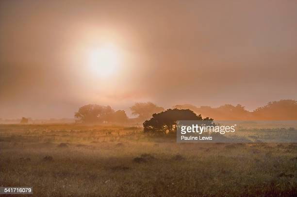 Early Morning at Entabeni Game Reserve