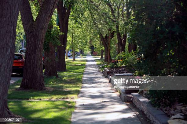 early morning canopy of old elm trees - saskatoon stock pictures, royalty-free photos & images