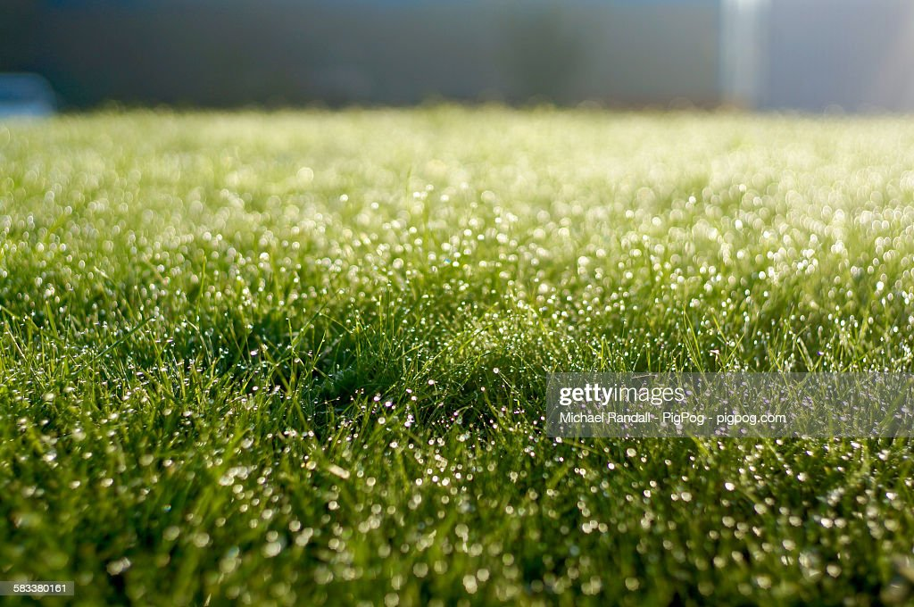 Early morning dew on grass : Stock Photo