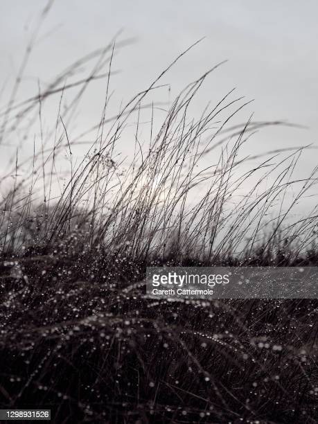 Early morning dew settles in a field near Stansted Airport on January 27, 2021 in Stansted, United Kingdom.