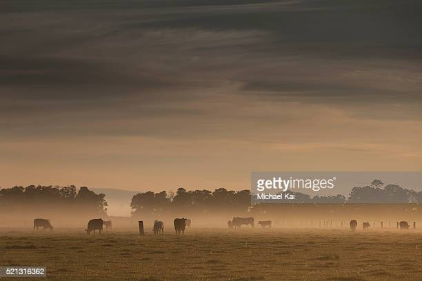Early morning fog and sunshine on farmland