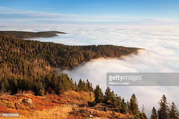 early morning fog at sunrise in autumn, feldberg mountain, black forest, baden wurttemberg, germany, europe - baden württemberg stock photos and pictures