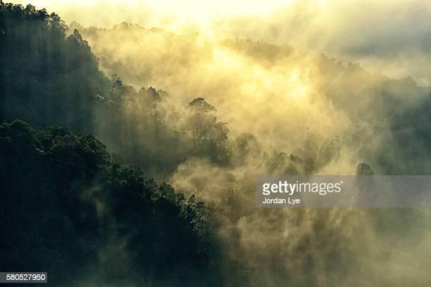 early morning fog - penetracion fotografías e imágenes de stock