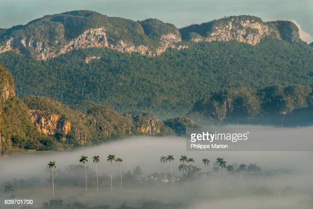 Early morning fog rolls by tobacco farmhouses in limestone karst valley of Valle de Vinales, Cuba