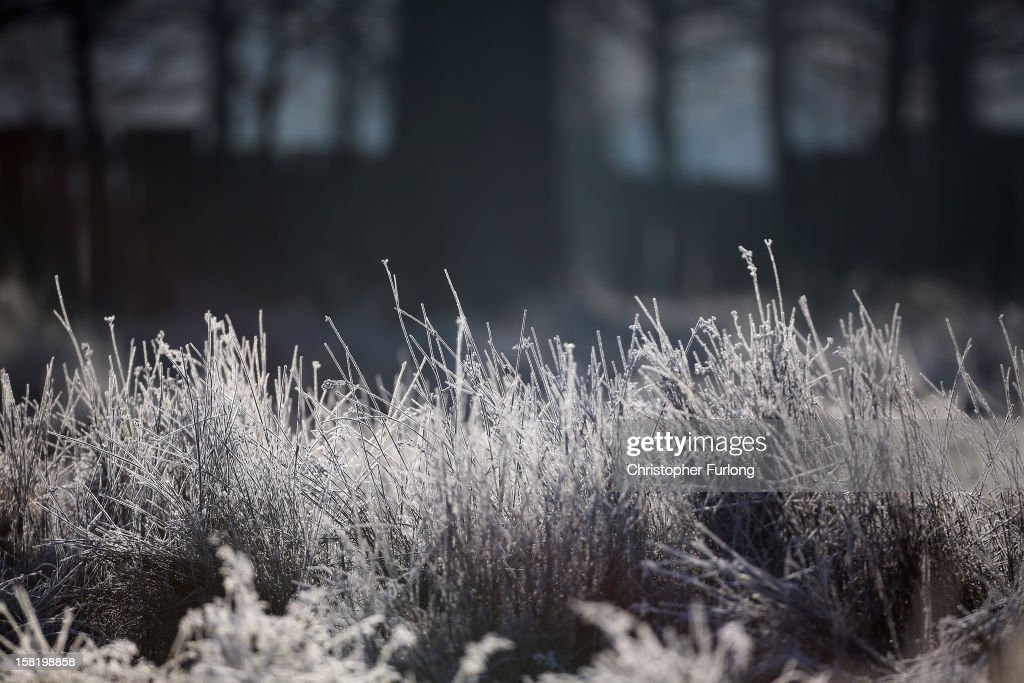 Early morning frost clings to long grass on December 11, 2012 in Knutsford, England. Forecasters are warning that the UK could experience the coldest day of the year so far tomorrow, as temperatures could drop as low as -14C, bringing widespread ice, harsh frosts and freezing fog. Travel disruption is expected with warnings for heavy snow.