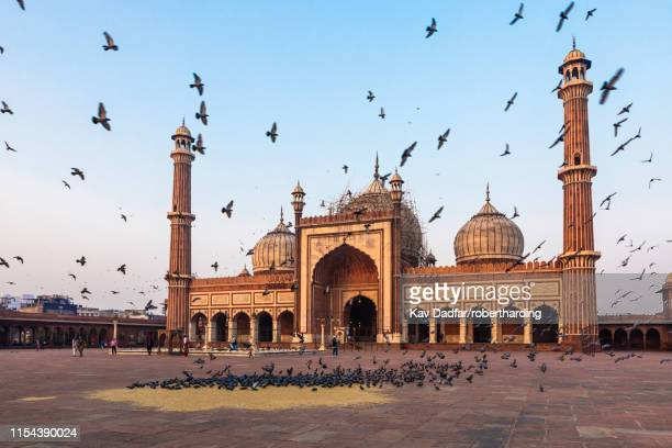 early morning in jama masjid, old delhi, india, asia - old delhi stock photos and pictures