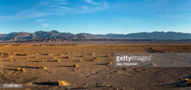 early morning in the desert in death valley, california, usa - valley stock pictures, royalty-free photos & images