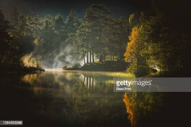 early morning in the forest - beauty in nature bildbanksfoton och bilder