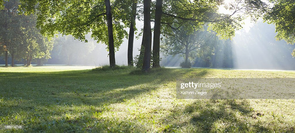 early morning in the park : Foto de stock