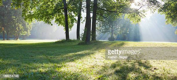 early morning in the park - gegenlicht stock-fotos und bilder