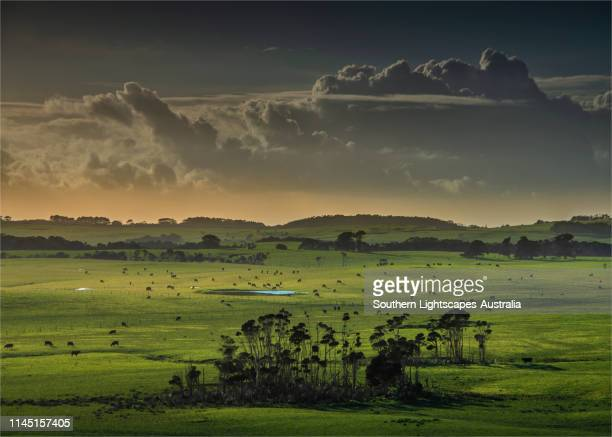 early morning light sweeps across the rural farmland at gentle annie, east coast of king island, bass strait, tasmania, australia. - tasmania stock pictures, royalty-free photos & images