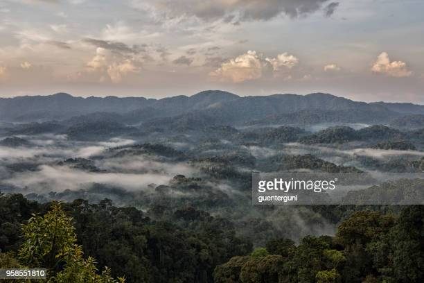 niebla de la madrugada en la selva de ruanda - ruanda fotografías e imágenes de stock