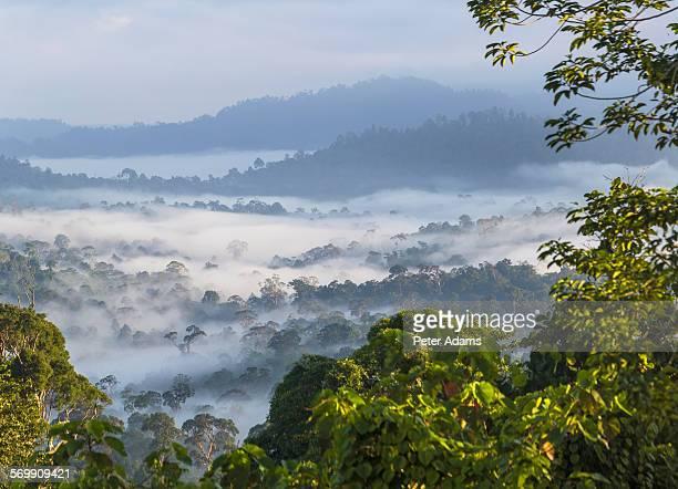 Early morning mist over Sabah rainforest, Borneo