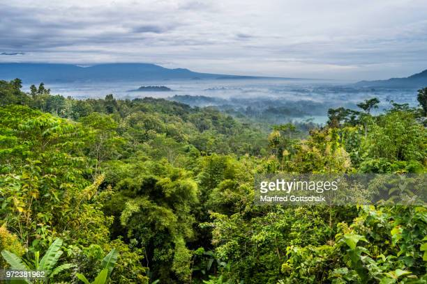 early morning mist over the kedu plain in central java with the distant stupas of ancient borubudur buddhist temple rising above the plain, java, indonesia - java indonesia fotografías e imágenes de stock