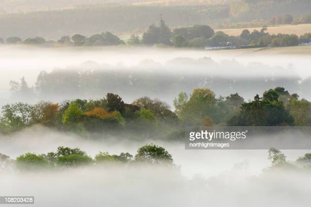 early morning mist - treetop stock pictures, royalty-free photos & images