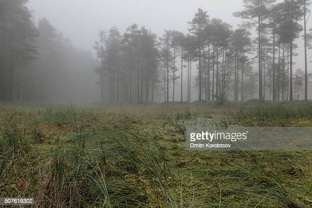 early morning on viru bog in lahemaa national park in estonia - harjumaa stock pictures, royalty-free photos & images