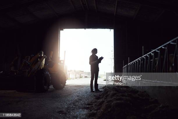 early morning rounds on the farm - dairy stock pictures, royalty-free photos & images