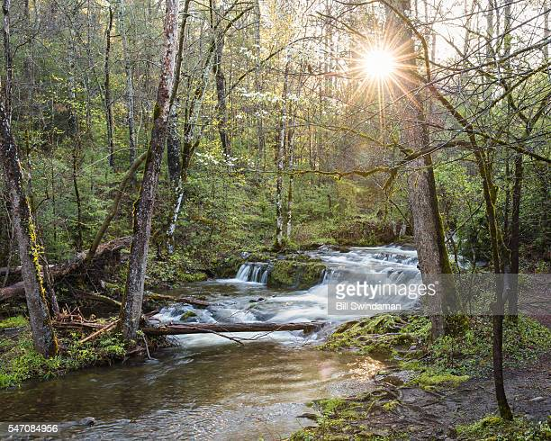 early morning scene with sun shining through forest in cades cove, great smoky mountains national park - cades cove stock pictures, royalty-free photos & images