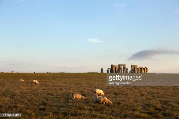 early morning sheep graze stonehenge monument salisbury plain wiltshire england - milehightraveler stock pictures, royalty-free photos & images