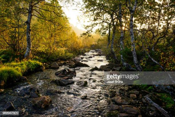early morning stream - monongahela national forest stock photos and pictures