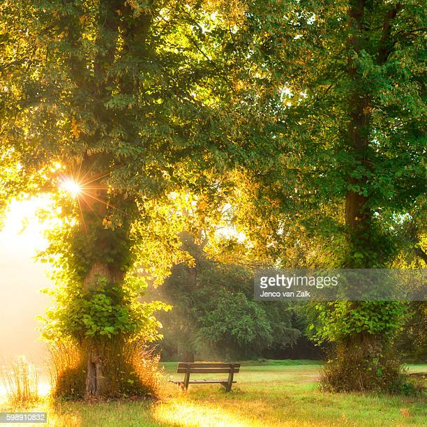 Early morning sun rays on a bench