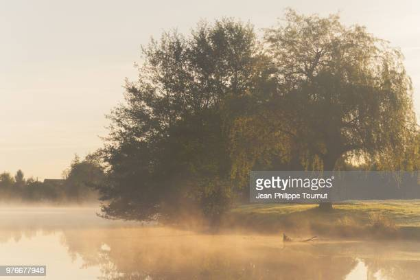 Early Morning Sunlight by a Lake in Rural France