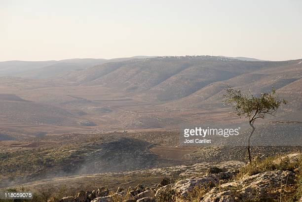 olive tree and west bank hills near nablus, palestine - palestinian stock pictures, royalty-free photos & images