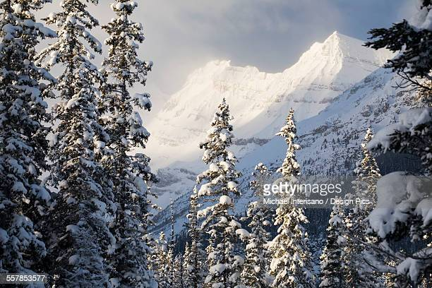 Early morning sunlit snow covered mountain peaks with snow covered evergreen trees and misty clouds