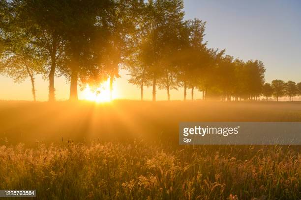 "early morning sunrise during a beautiful springtime day over the zwartendijk near kampen - ""sjoerd van der wal"" or ""sjo"" stock pictures, royalty-free photos & images"