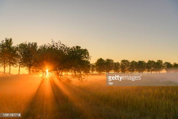 """early morning sunrise during a beautiful springtime day over the zwartendijk near kampen - """"sjoerd van der wal"""" or """"sjo"""" stock pictures, royalty-free photos & images"""