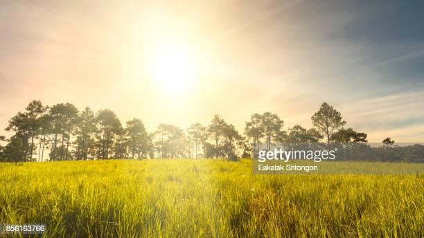 Early morning sunrise over fields