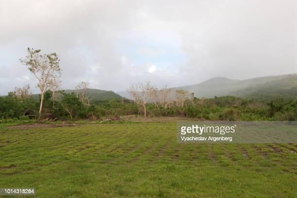 early morning tropical rain in the field, marabut, philippines - argenberg fotografías e imágenes de stock