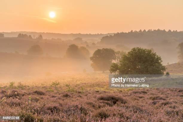 early morning, veluwezoom national park - posbank ストックフォトと画像