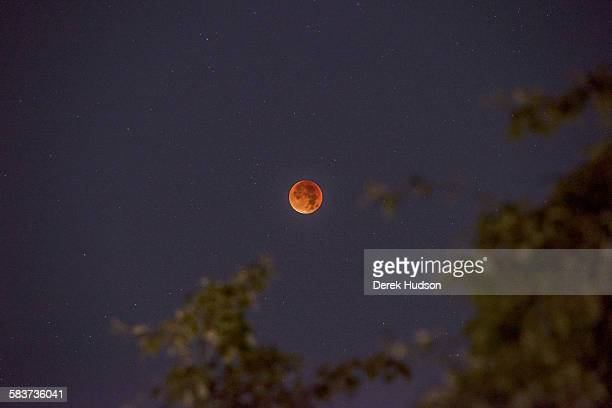 Early morning view of a total eclipse of the moon which appears as a bright orange sphere Berlin Germany September 28 2015