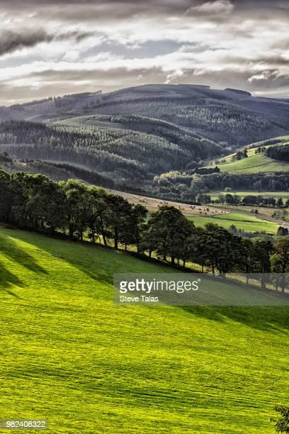 Early Morning , Wallace Hill, Cardrona, Scotland