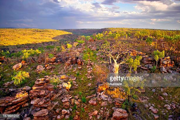 Early rain at the end of the dry season falls on savannah with Boab tree Phillips Range Marion Downs Wildlife Sanctuary northern Western Australia