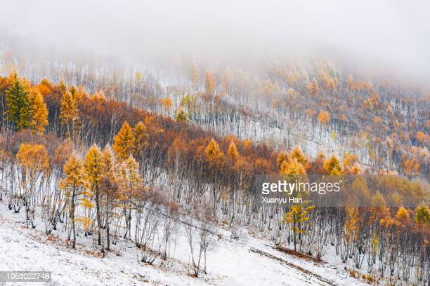 Heavy Mist Stock Pictures Royalty Free Photos Images
