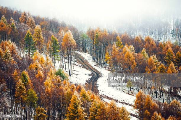 553 Heavy Mist Blankets Photos And Premium High Res Pictures Getty Images