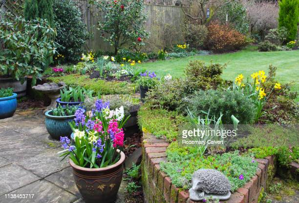 early spring flowers in domestic garden, england. - flowering plant stock pictures, royalty-free photos & images