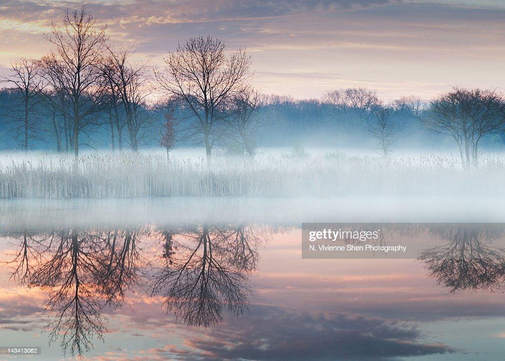 Early spring mist : ストックフォト