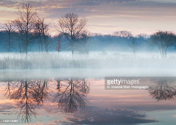 early spring mist - レイクフォレスト ストックフォトと画像