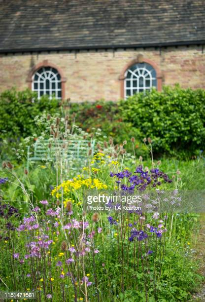 early summer flowers in a walled garden - columbine flower stock pictures, royalty-free photos & images