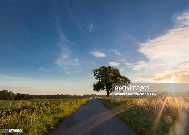 early summer morning - västra götaland county stock pictures, royalty-free photos & images